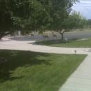 Lawn Surrounding