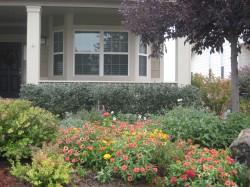Beautiful Lawn Flowers