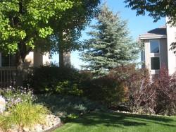 Garden Trees Ideas