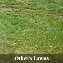 Other's Lawns