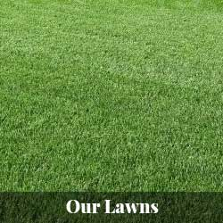 Our Lawns