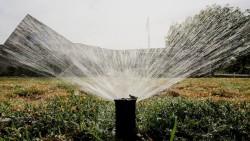 watering_lawn