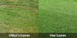 Fertilization & Weed Control -1