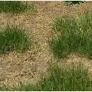 Grass Brown