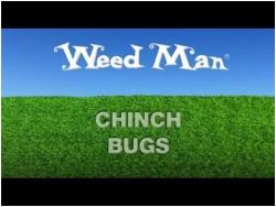 chinch bugs video