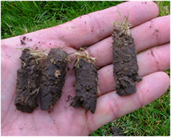 Plugs pulled from your lawn will disperse back into the soil