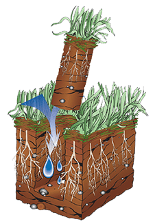 Get to the Root of the Problem. Aerate Your Lawn in September.