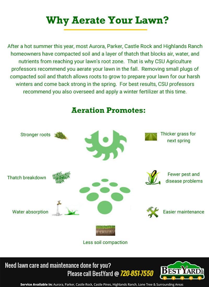 Why Aerate Your Lawn