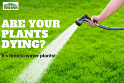 Are Your Plants Dying