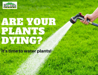 Are Your Plants Dying?