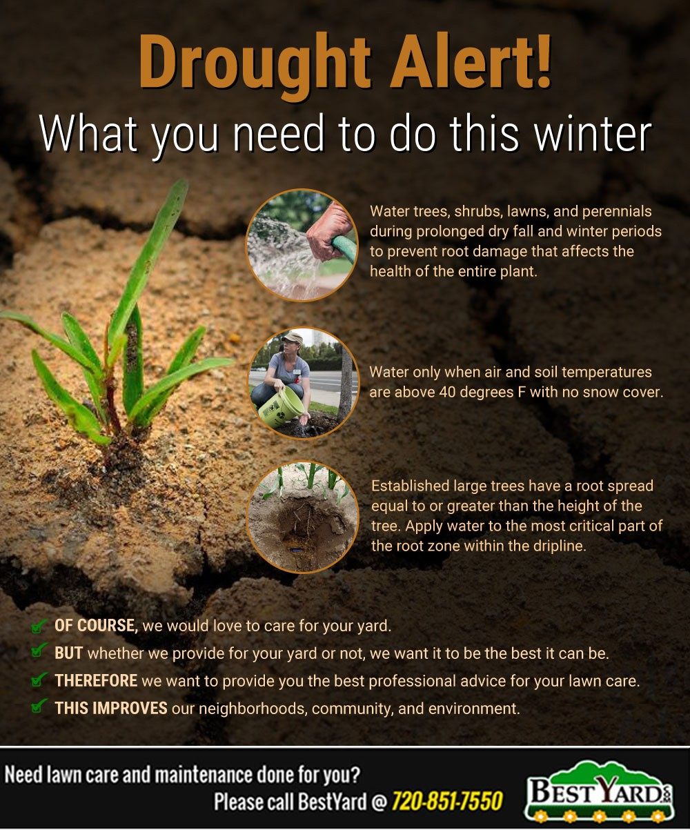 Drought Alert! What you need to do this winter