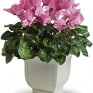 Personalize a Plant Your Valentine Will Love