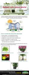 Refresh With Indoor Plants