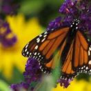 Plan Now to Bring in Pollinators