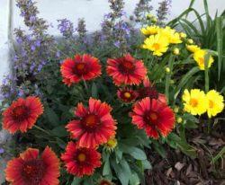 Perennials groups