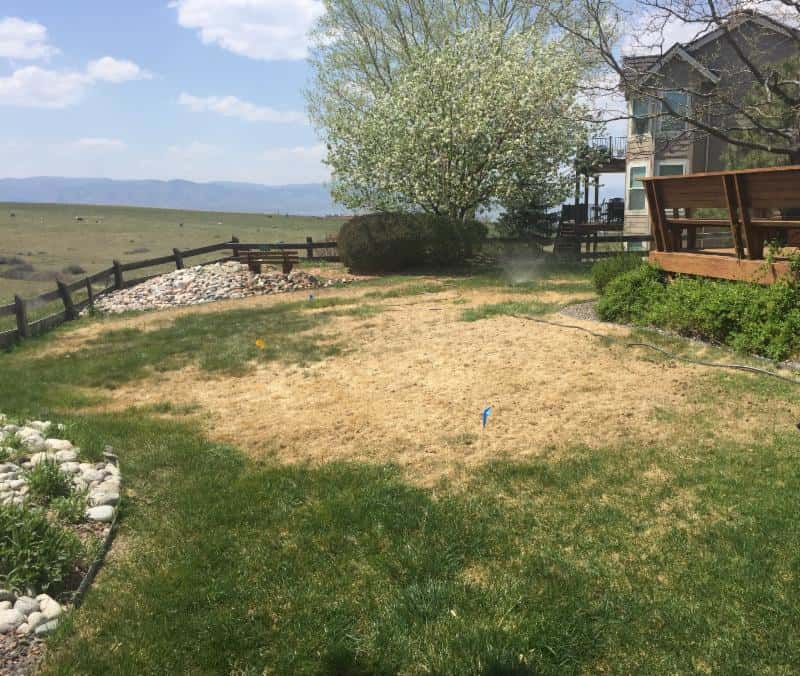 Heads-up on lawn problems this year