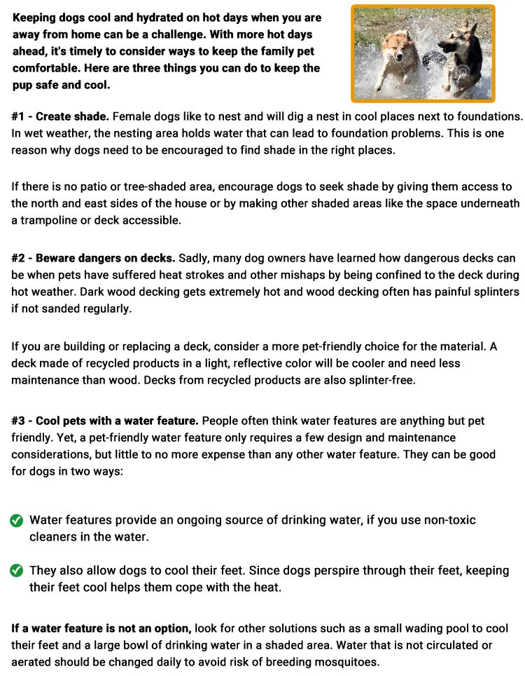 Is your dog suffering in the heat?
