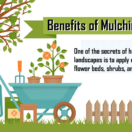 Benefits of Mulching the Yard