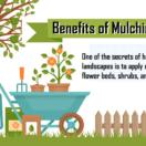 Benefits of Mulching the Yard