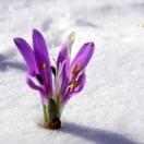 spring tips