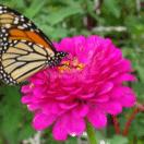 Welcome butterflies and birds