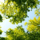 Plant a tree this spring