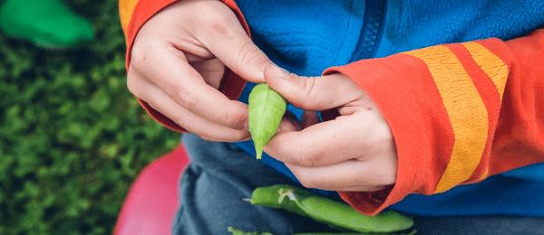 Children benefit from gardening