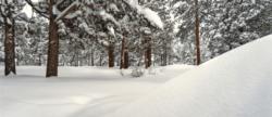 snow bestyard