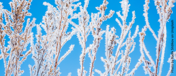 frost or freeze